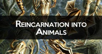 Reincarnation to Animals: Can a Person Incarnate in an Animal?