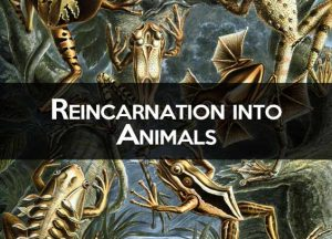 Reincarnation to Animals