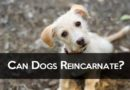 Can Dogs Reincarnate? Will My Pet Come Back as Another Animal?